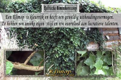 Klimop